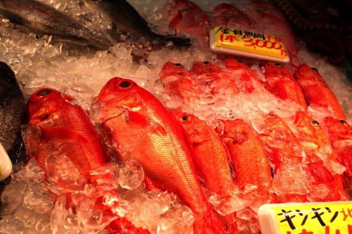 ปลาคิงกิ